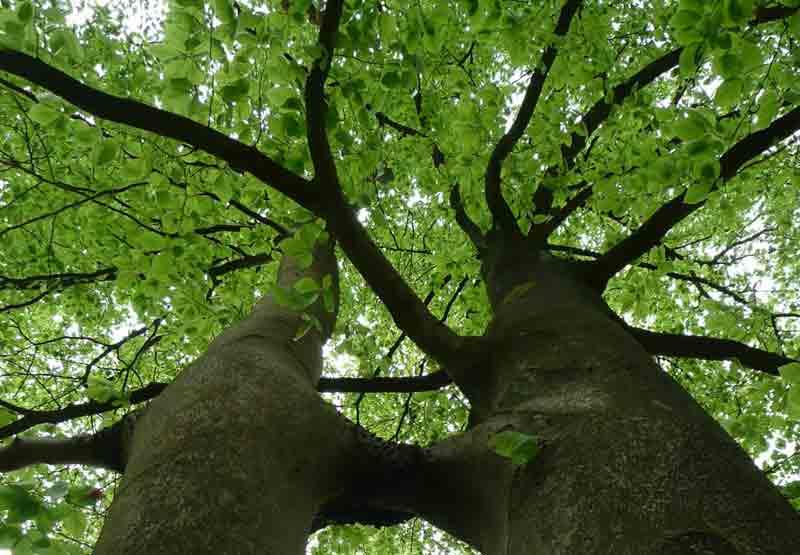 Laat Los - Foto Ineke de Haan - www.origien.nl - © www.fotomissie.nl