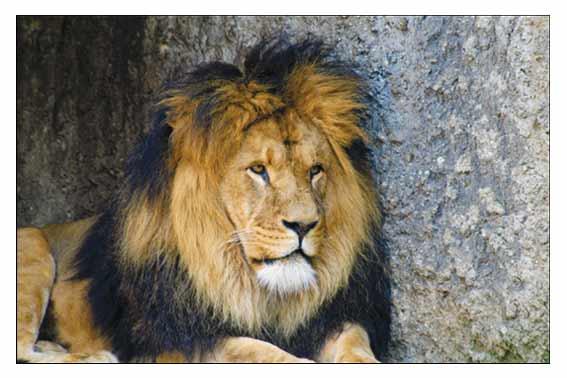 Totemdieren: coachingskaarten voor teambuilding en persoonlijke groei.